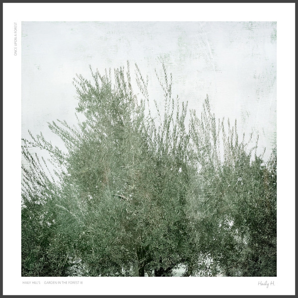 The Wind no.02 : Olive Tree