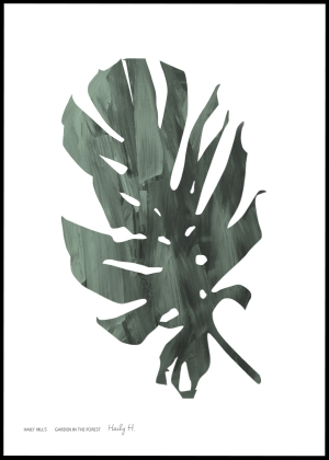 Monstera no.01