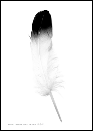 Feather no.02